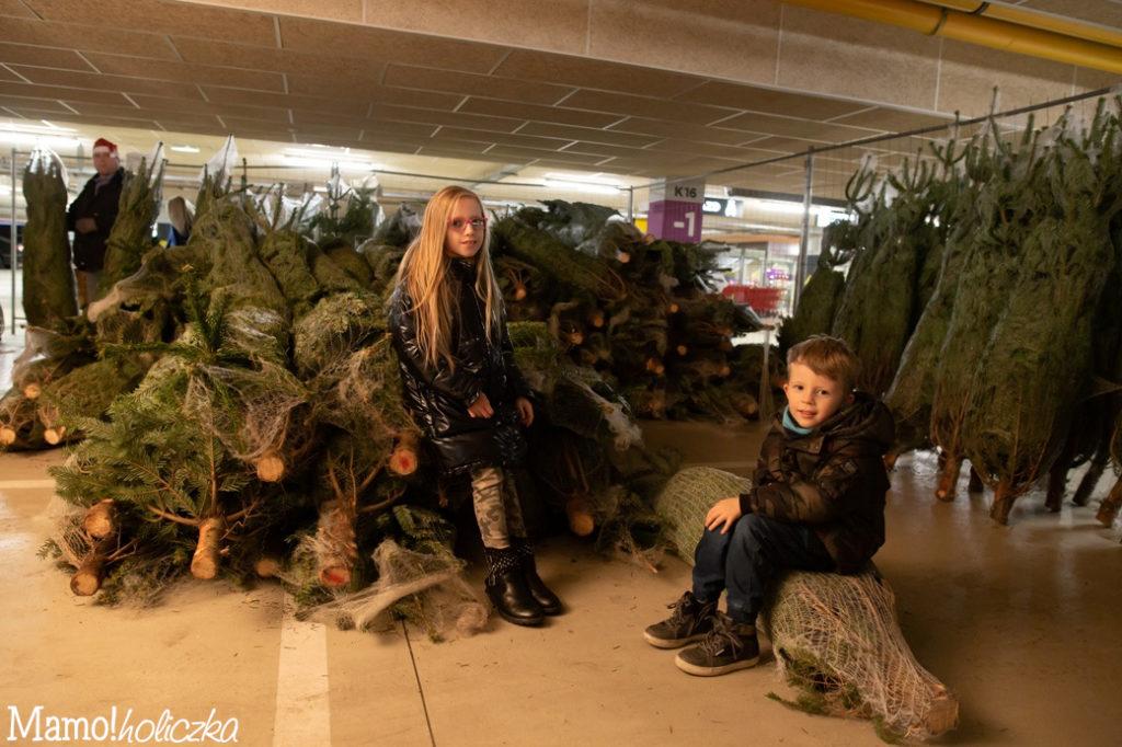 świąteczne drzewko, choinka, święta, zakupy, warszawa